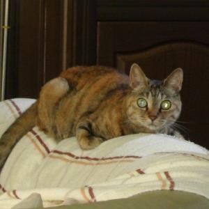 猫の目が光る理由はタペタム(tapetum)があるからじゃない