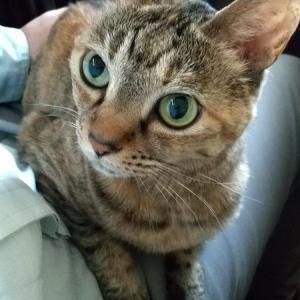 我が家に猫が来て9年