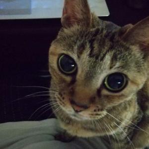 猫がお腹に乗ってくる