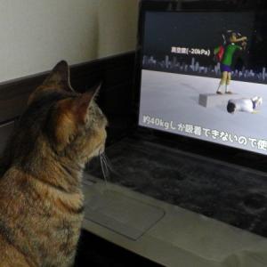 なぜか猫が夢中になる「物理エンジンくん」
