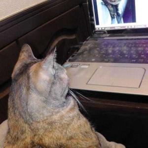 猫はパソコンが好き