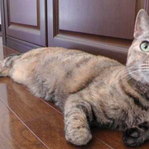猫の日の猫