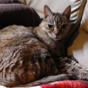 推定年齢10歳の猫
