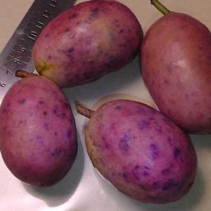 不老長寿の果実といわれるムベの食べ方
