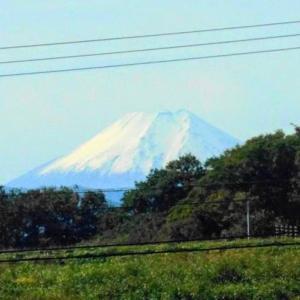 遠く仰ぎ見る冠雪富士に想う(*´▽`*)