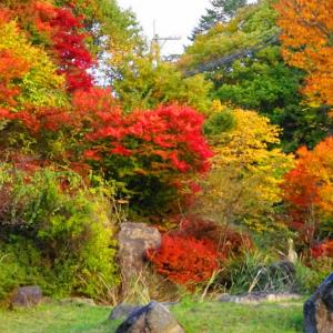 秋深まる深入山(*´▽`*)🎶