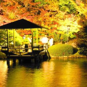 三景園ライトアップ紅葉♫光の中へ...