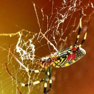 女郎蜘蛛🕷に想ふ(*^▽^*)♪