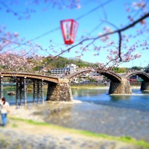 サクラ~桜~弥生の~空に♪