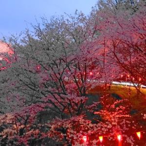 『夜桜おしち』に想う(≧▽≦)💕