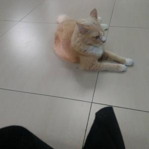 スカッシュセンターで飼われてた猫