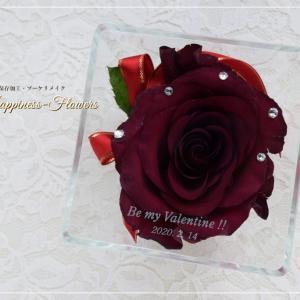深紅バラ、一輪。