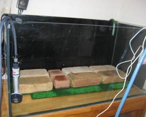 熱帯魚水槽レイアウト変更