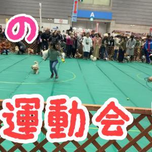 まるでモップ?!犬の大運動会!【ペット博2020】