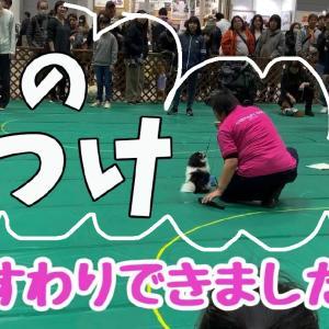 あなたの愛犬は、おすわりできますか?!【おすわりの練習】【ペット博 しつけ教室】(動画あり☆)