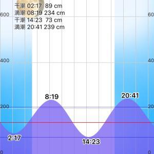 木曽川 クロダイが元気で。。