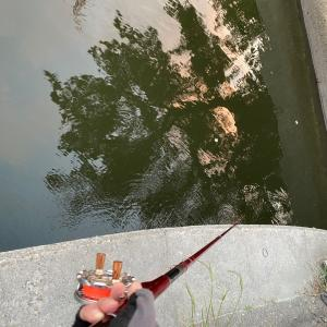 ■【名港チヌ釣り】ランガン