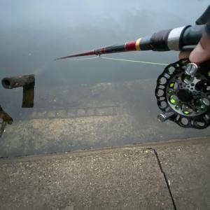 ■【朝夕】短時間釣行