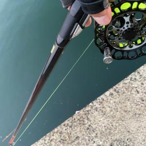 ■【豊浜釣り桟橋】クロダイ ヘチ釣り → サビキ釣り