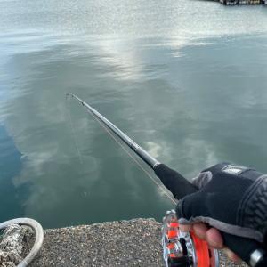 ■【豊浜釣り桟橋】ヘチ釣り、サビキ情報