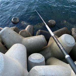 ■【豊浜釣り桟橋】のべ竿 で何が釣れるか?!