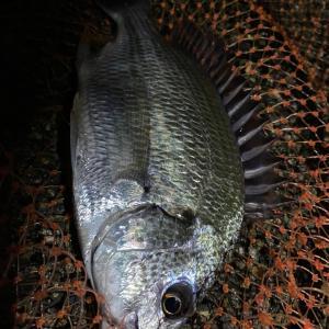 ■【名港西】早朝からの釣り