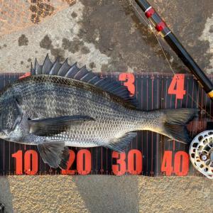 ■【夏の釣り具?!】フィッシュグリップ、カスタム