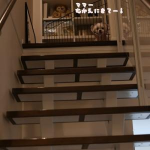リビング階段ゆえに