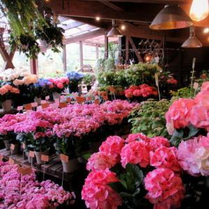 FLOWER FIELD Garden's * ガーデニングシーズン到来♪