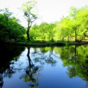 新緑の雲場池 * 黄菖蒲が・・・。