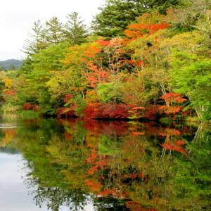 軽井沢の紅葉 * 10/11の雲場池・ぼちぼち来てます♪