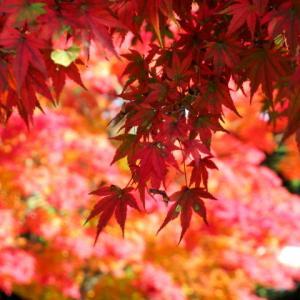 軽井沢の紅葉 * 10/13のプリンス通り、部分的に見頃♪