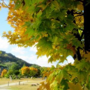 姨捨SA-月の里おばすて * 千曲川の眺望と黄葉♪