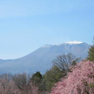 軽井沢の桜・2021 * 軽井沢町・塵芥処理場の桜が見頃♪