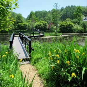 軽井沢レイクガーデン * 水辺の植物~レイクサイドパス♪