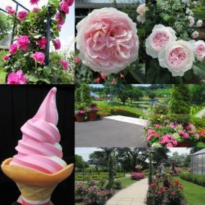 中之条ガーデンズ① * バラが花盛りの美しいガーデンへ♪