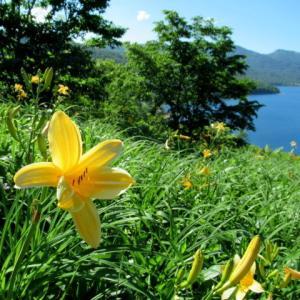 天空の湖・野反湖 * 湖畔を黄色く染めるノゾリキスゲ♪