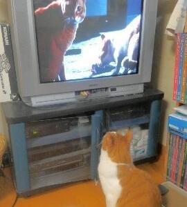 テレビの中と外の猫