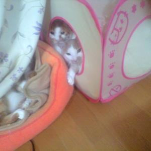 猫ばかキラー