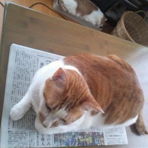 朝の新聞タイム