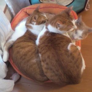 猫の猫背はそう悪いもんじゃない