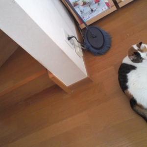 落下猫アレコレ