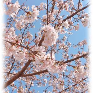 去年の桜&思い出♡今月の新作について