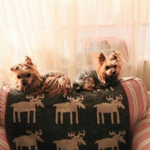 ソファーの背もたれが大好きなの。