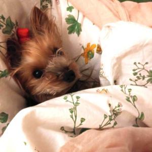 あんずの寝床