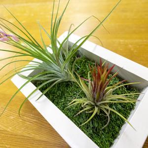 新しい植物購入
