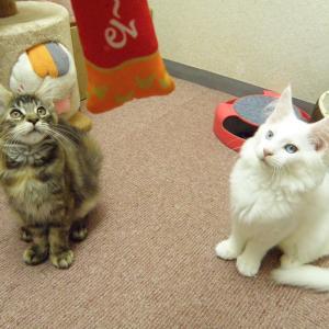 今日は「やっぱ子猫でしょ!」の巻