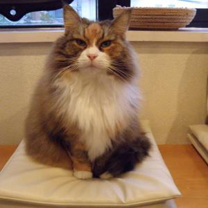 今日は「新型コロナ、猫にも感染の可能性 『心配は不要』と専門家」の巻