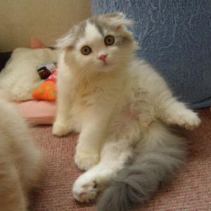 今日は「今いる子猫ちゃん達あと数日です!」の巻
