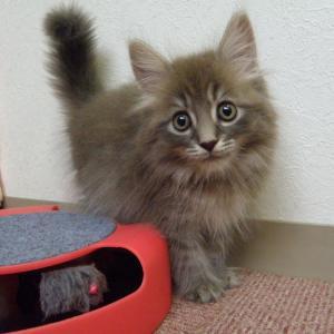 今日は「やって来ましたノルの子猫ちゃん!」の巻